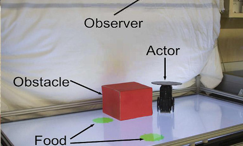 An actor robot runs on a playpen trying to catch the visible green food, while an observer machine learns to predict the actor robot's behavior.